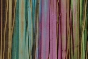 Batik Australia BA 61