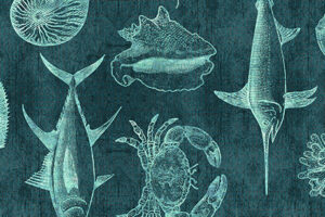 Ocean Oasis Blueprint Dark Lagoon  25831 Q